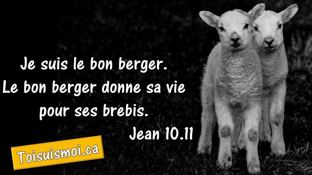 Jean 10.11 - Le bon berger
